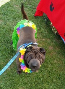 Contact Shar Pei Savers