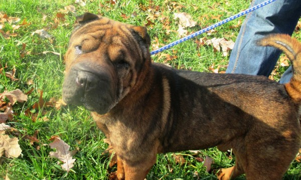 Mojo – Foster home needed
