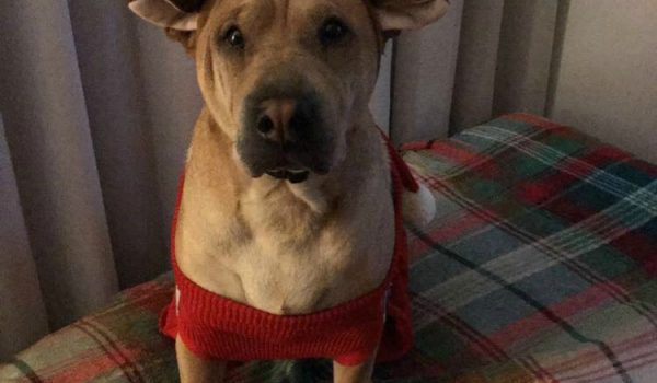 Lucy – Available